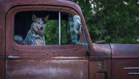 Hund i gammal röd pickup Royaltyfria Foton