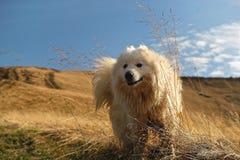 Hund i gräset mot bakgrunden av berglandskapet royaltyfria foton