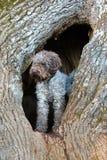 Hund i hålet Arkivbild