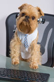 Hund i hörlurar med mikrofonen Royaltyfri Bild