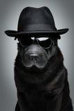 Hund i hatt och solglasögon Arkivbild