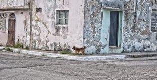 Hund i havannacigarr Arkivbilder