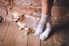 Hund i hemtrevlig klänning royaltyfri foto