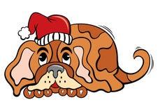 Hund i jultid Fotografering för Bildbyråer