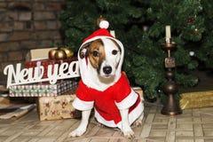 Hund i jultomtendräkt royaltyfri fotografi