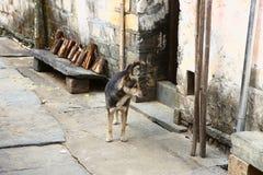 Hund i kinesisk bygata Arkivbilder