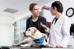 Hund i kliniken för kontroll-upp royaltyfria bilder