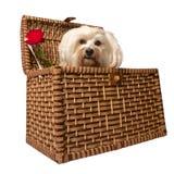 Hund i korg royaltyfri fotografi