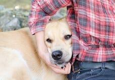 Hund i kram Royaltyfria Foton