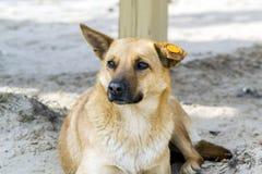 hund i lekplatsen Arkivfoto