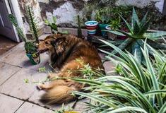 Hund i min tr?dg?rd arkivfoto