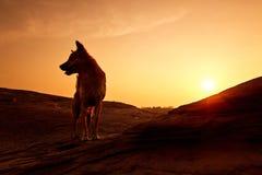 Hund i morgonen royaltyfri foto