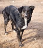 Hund i natur royaltyfria bilder
