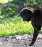 Hund i natur royaltyfri fotografi