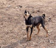 Hund i natur fotografering för bildbyråer