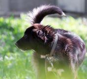 Hund i natur arkivfoton