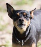 Hund i natur royaltyfria foton