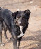Hund i natur royaltyfri foto