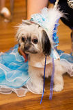 Hund i prinsessan Costume Arkivfoto