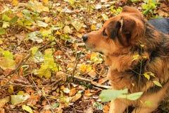 Hund i profil arkivfoton