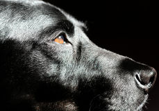Hund i profil Arkivfoto