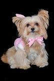 Hund i rosa pastellfärgad klänning Fotografering för Bildbyråer