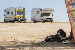 Hund i sand arkivfoto