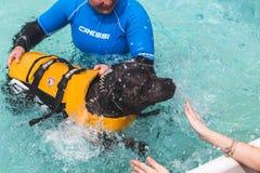 Hund i simbassängen på Quattrozampeinfiera i Milan, Italien Royaltyfri Fotografi