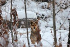 Hund i skogen Arkivfoto