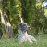 Hund i skuggan Något väckte hans kuriositet Selektivt fokusera Royaltyfri Foto