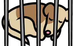 Hund i skydd Arkivbild