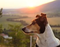 Hund i slovaknaturen Arkivfoto