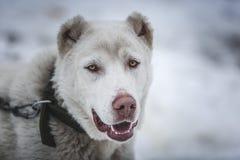 Hund i snow royaltyfri bild