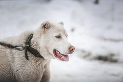 Hund i snow royaltyfri foto