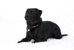 Hund i snow Arkivbilder