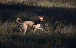 Hund i solljus och skugga royaltyfria foton