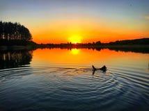 Hund i solnedgång Royaltyfria Foton