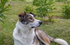 Hund i sommarträdgård Royaltyfria Bilder