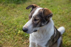 Hund i sommarträdgård Arkivfoton