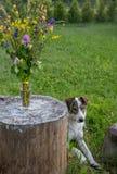 Hund i sommarträdgård Arkivfoto