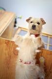 Hund i spegeln Fotografering för Bildbyråer