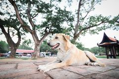 Hund i templet Royaltyfria Bilder