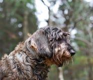Hund i träna arkivfoto