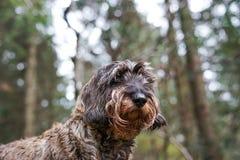Hund i träna royaltyfria bilder