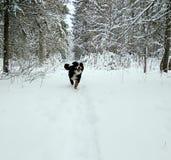 Hund i träna Royaltyfri Bild