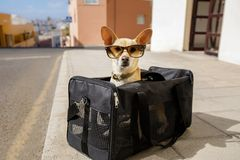 Hund i transportask eller påse som är klar att resa arkivbilder