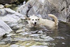 Hund i vattentips royaltyfria foton