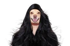 Hund i wellnessbrunnsort Royaltyfria Foton