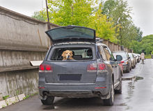 Hund im Auto Stockfotos