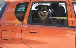 Hund im Auto lizenzfreie stockbilder